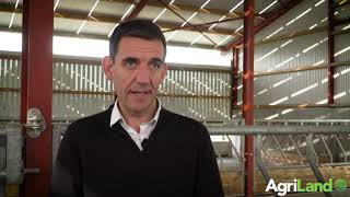 Dairy calf prices