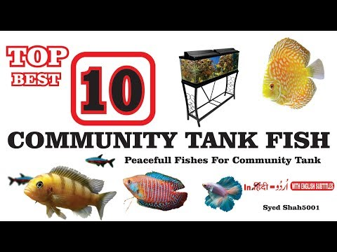 TOP 10 BEST Community FISH FOR 20 GALLONS TANK Most Peaceful Fishes For Beginners