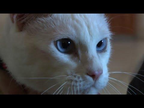 ARCHIVES: Achille, chat sourd, pronostiqueur officiel du Mondial