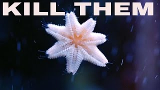 Little White Starfish On Glass And How To Kill Them : Rotter Tube Reef