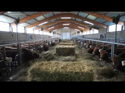 Aveyron : l'esprit des filières allaitantes ! [vidéo]