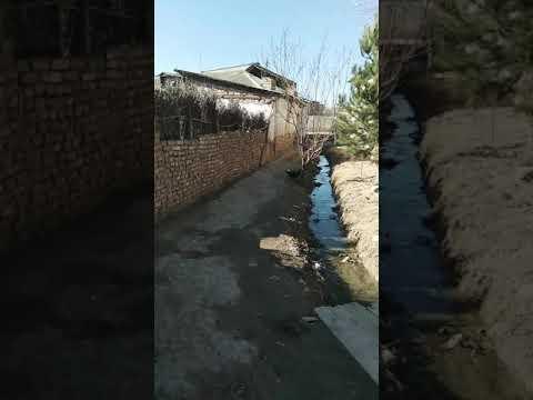 NAMANGANDA ZAPAL VIDEO QOROVUL USHLANDI 2021 Наманганда запал видео коровул ушланди 2021