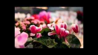 Цветочное счастье - уход за комнатными растениями(Цветочное счастье - уход за комнатными растениями. Грунты и дренажи, средства защиты, жидкие, водорастворим..., 2013-01-25T07:59:48.000Z)