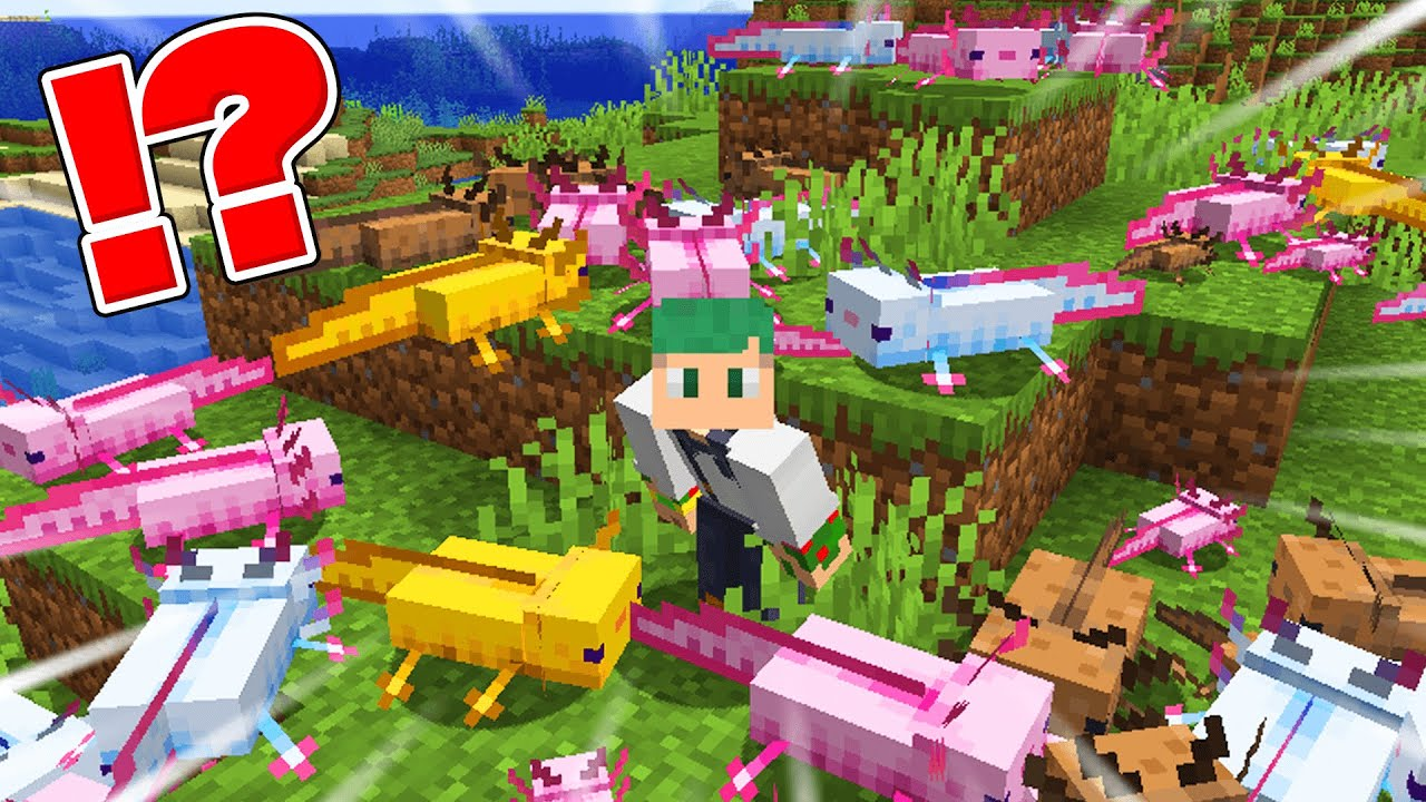 How to make Axolotl a friend !?【Minecraft 1.17】