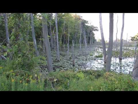 Wetlands At The Geneva State Park (Ashtabula County, Ohio)
