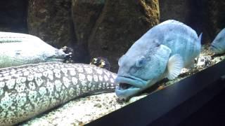 Греция,Крит,Гурньес,аквариум,июнь 2012.(, 2012-07-07T20:52:55.000Z)