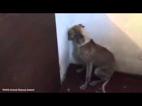 Dog so traumatised by years of abuse she is too scared