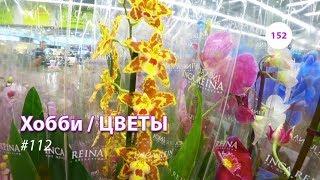 видео: 152#112 / Хобби-Цветы / 12.02.2019 - ЛЕРУА МЕРЛЕН (ТК ТРОЙКА). ОБЗОР