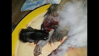Спасение и помощь кошке, которую разодрали собаки