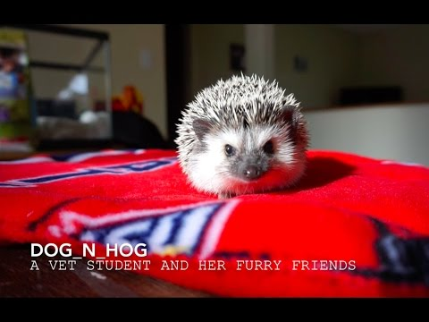 Designing A Hedgehog Cage What To Do What Not To Do