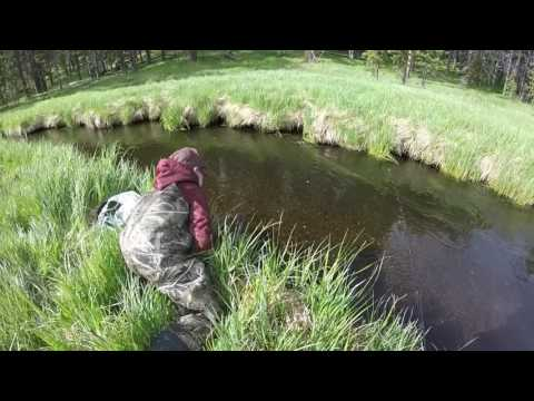 Fly Fishing with Kids in Yellowstone: June