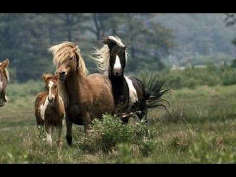 Ponies of the Prairie