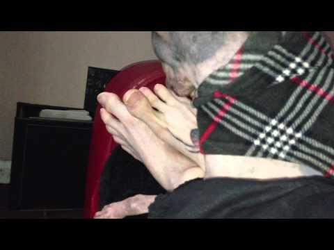 American Hairless Terrier licking feet