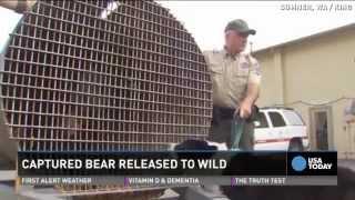 Dog Hunts Down 200-pound Bear Roaming Neighborhood