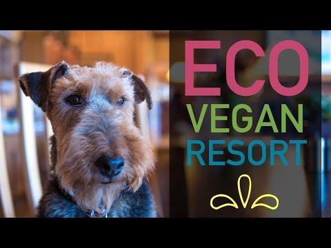 The Stanford Inn: Vegan Resort & Spa (Virtual Tour)