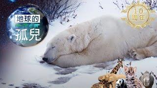 (網路搶先版)地球的孤兒~ 北極熊世紀末滅絕危機-台灣1001個故事-20181209【全集】