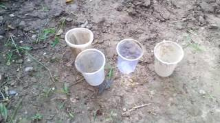 3_पौधे कैसे लगायें (starting to planting)