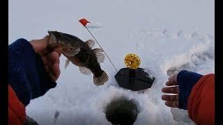 Первый лед 2020 2021 ЖЕРЛИЦЫ Ловля РОТАНА на ЖЕРЛИЦЫ Зимняя рыбалка Ротан жрёт ФЛАЖКИ горят