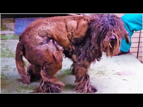 When Rescuers Laid Eyes On This Poor Neglected Creature, They Couldnt Even Work Out What It Was