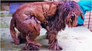 When Rescuers Laid Eyes On This Poor Neglected Creature, They Couldn't Even Work Out What It Was
