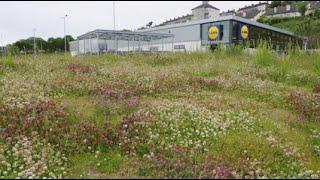 East Cork Biodiversity Networking Programme