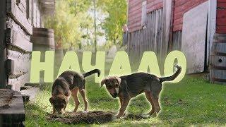 Собачья жизнь - Начало