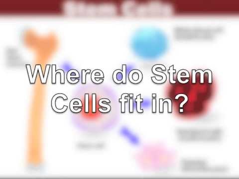Telomeres, Life Style and Stem Cells
