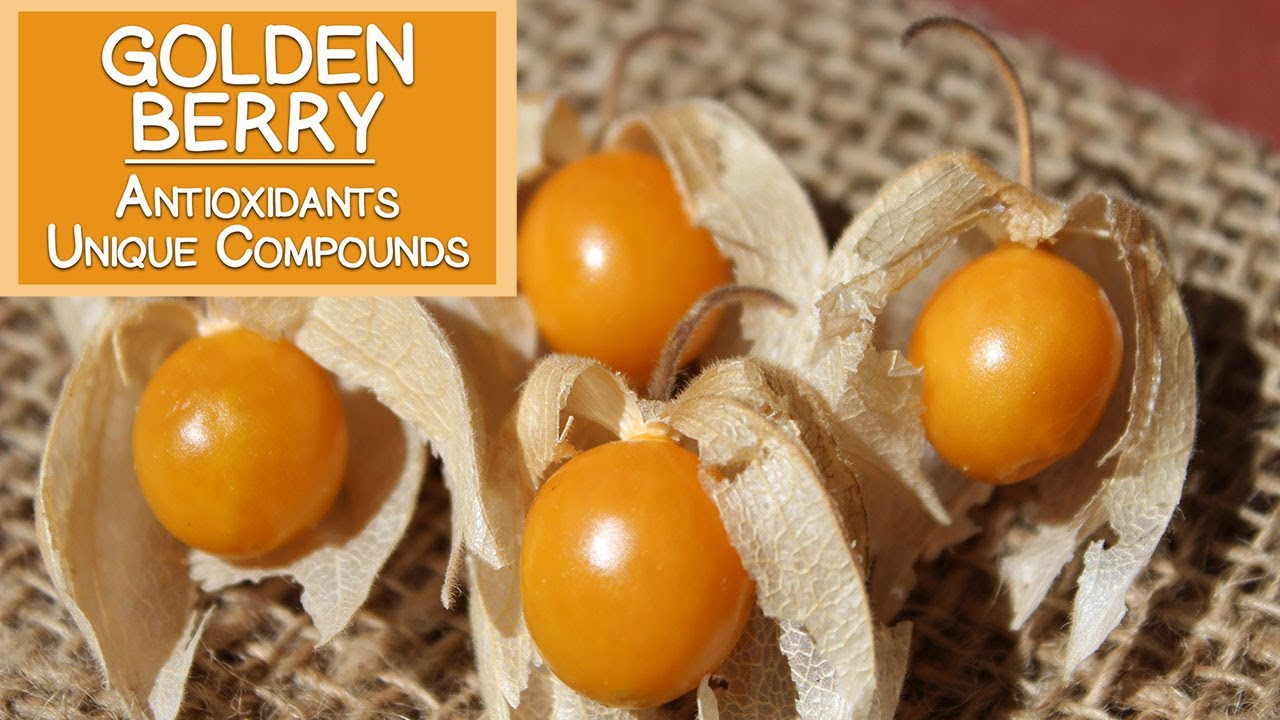 Golden Berry, High in Antioxidants and Unique Plant ...