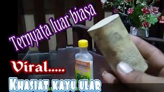 Download Mp3 Kayu Ular Berkhasiat