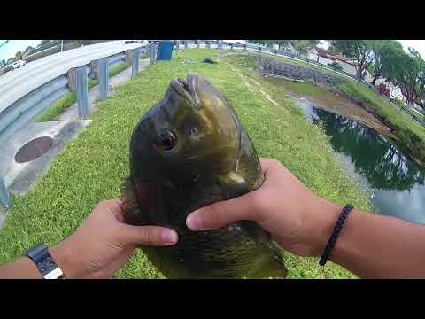 Canal Fishing in South Florida