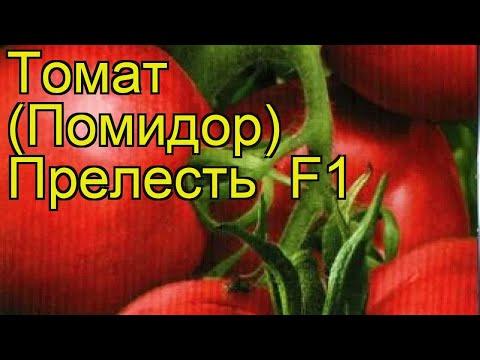 Томат обыкновенный Прелесть. Краткий обзор, описание характеристик, где купить семена