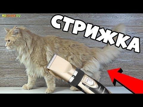 Как постричь кота, обзор машинки Baorun  для стрижки животных