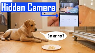 Leaving My Dog Alone With Food Challenge | Can My Labrador Puppy Wait Until Asked?