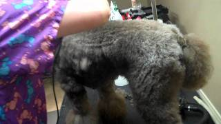 Highlights With Laurie Hogan Poodle Pet Trim Seminar