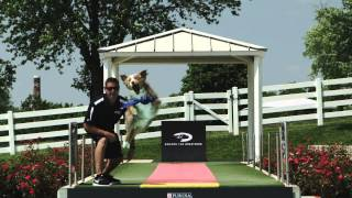 Diving Dogs - Competition - Pro Plan P5 Training