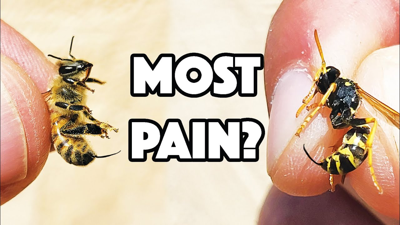 WASP STING Vs BEE STING! Which hurt WORST?!
