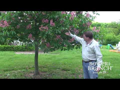 Grower Jeff: Fort McNair