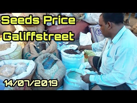 Seeds Price In Galiffstreet Birds And Pets Market Kolkata HD