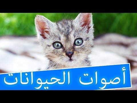 انشودة اصوات الحيوانات رائعة للاطفال تعليمية