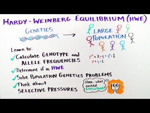 Hardy-Weinberg Equilibrium - iBiology & Youreka Science