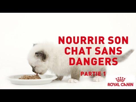 Nourrir Son Chat Sans Dangers - PARTIE 1⎜ROYAL CANIN®