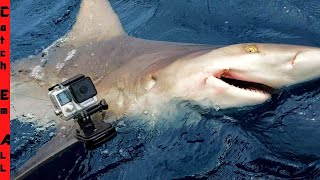 I Strapped a GoPro on a SHARK!