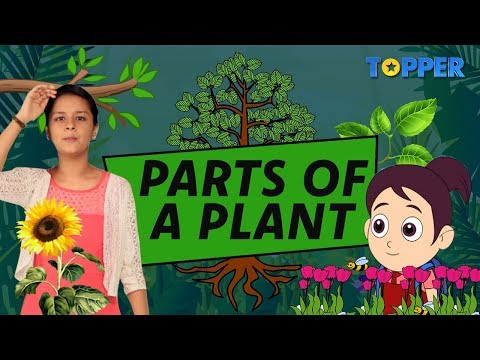 Parts Of A Plant For Kids | Pollination And Germination | Class 1 To 5 Science |