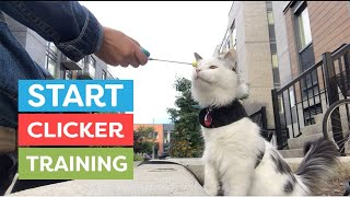 How To Start Clicker Training Your Cat
