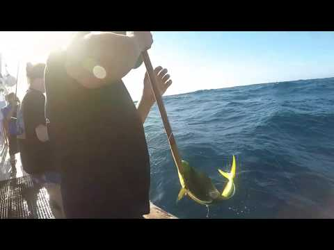 Islander Charters - San Diego Sportfishing - Sept 2018