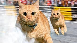 TOKYO DRIFT CATS!