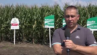 Портфолио Фарм - с. Дибич - нови хибриди царевица