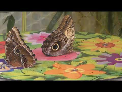 Twycross Zoo - Butterflies