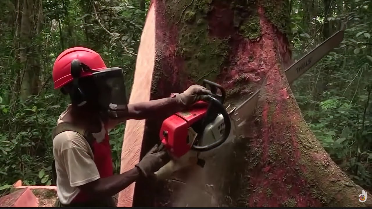 Deadliest Journeys - Gabon