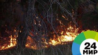 Швеция обратилась к странам ЕС за помощью в тушении лесных пожаров - МИР 24